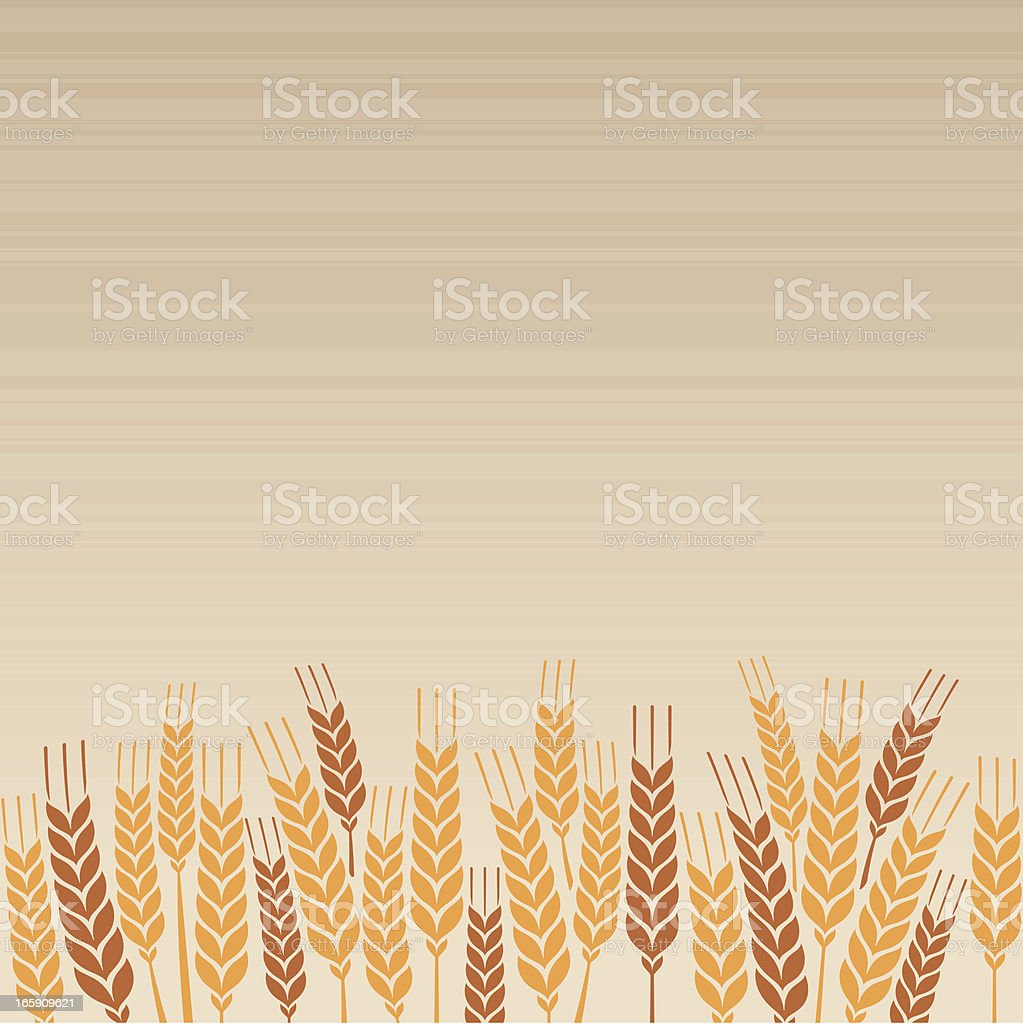 Wheat Field vector art illustration