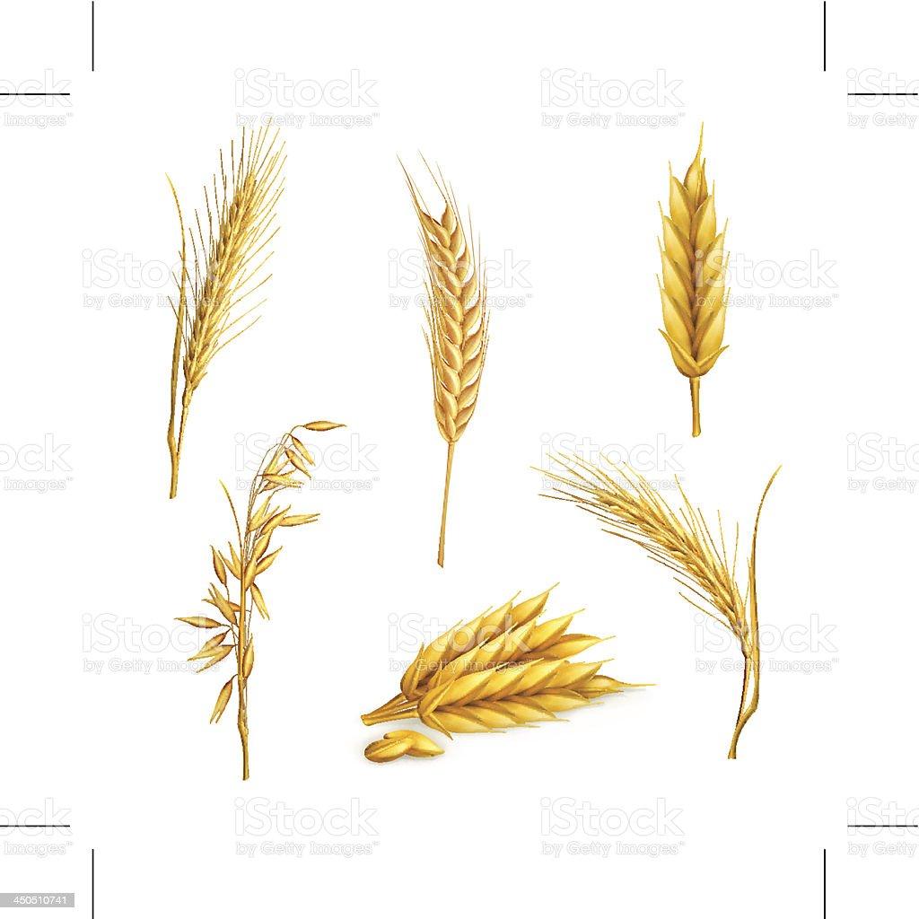 Wheat, set vector art illustration