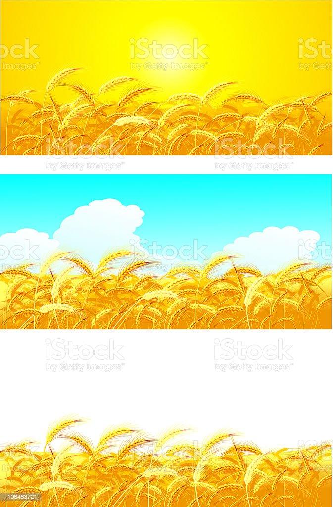 wheat royalty-free stock vector art