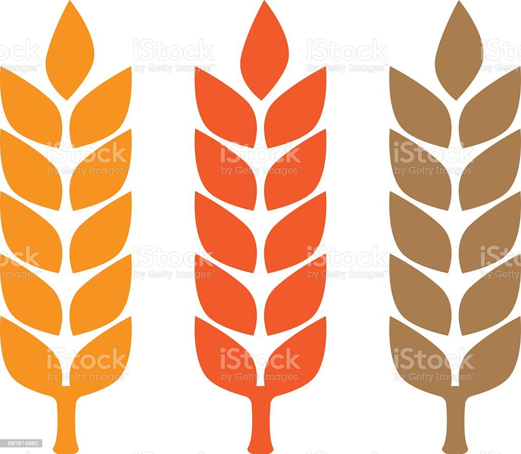 Wheat yellow gluten free grain vector art illustration