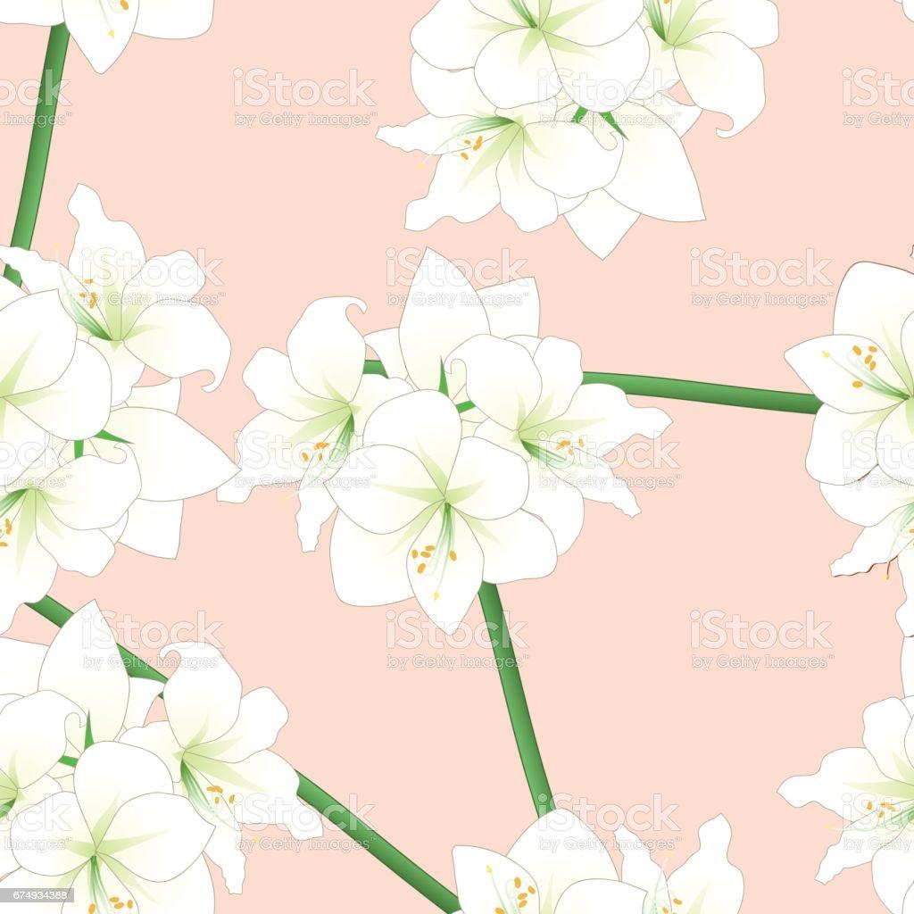 White Amaryllis on Light Pink Orange Background. Vector Illustration vector art illustration