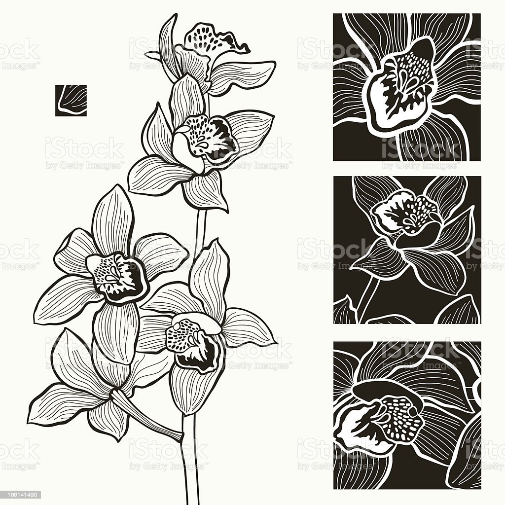 white and black orchids royalty-free stock vector art
