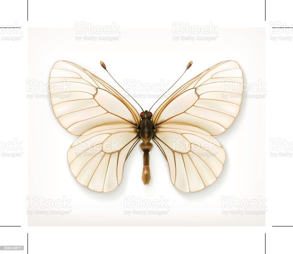 White butterfly  icon vector art illustration