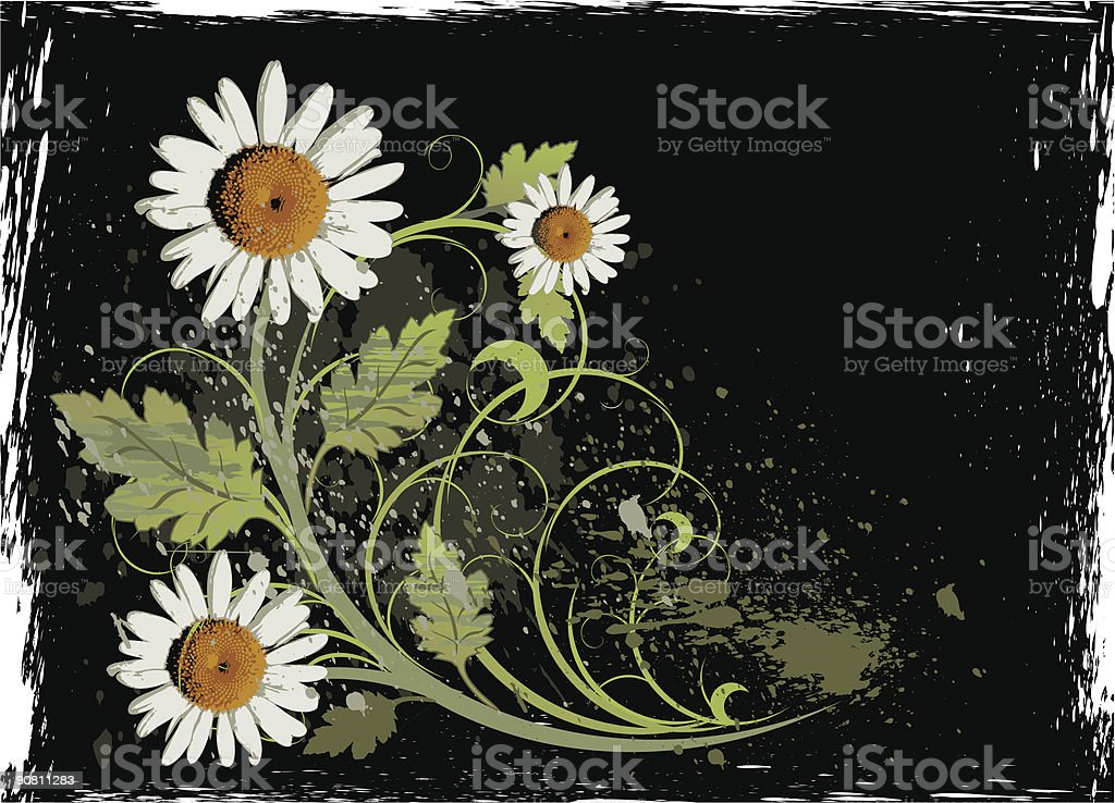 White camomiles on a black grunge background (vector floral ornament) royalty-free stock vector art