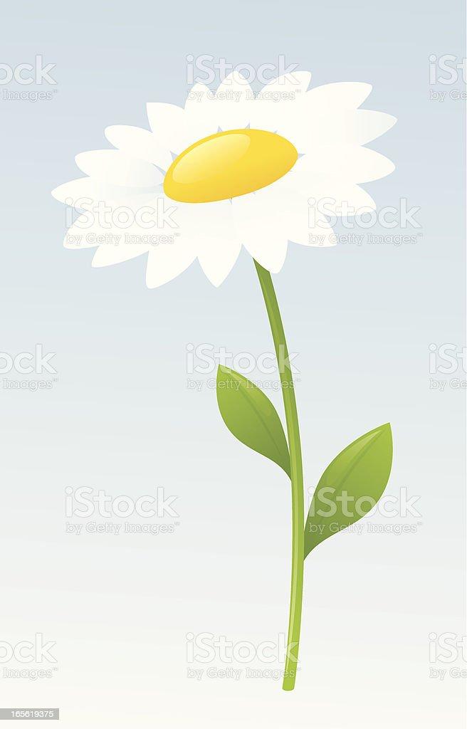 White Daisy royalty-free stock vector art
