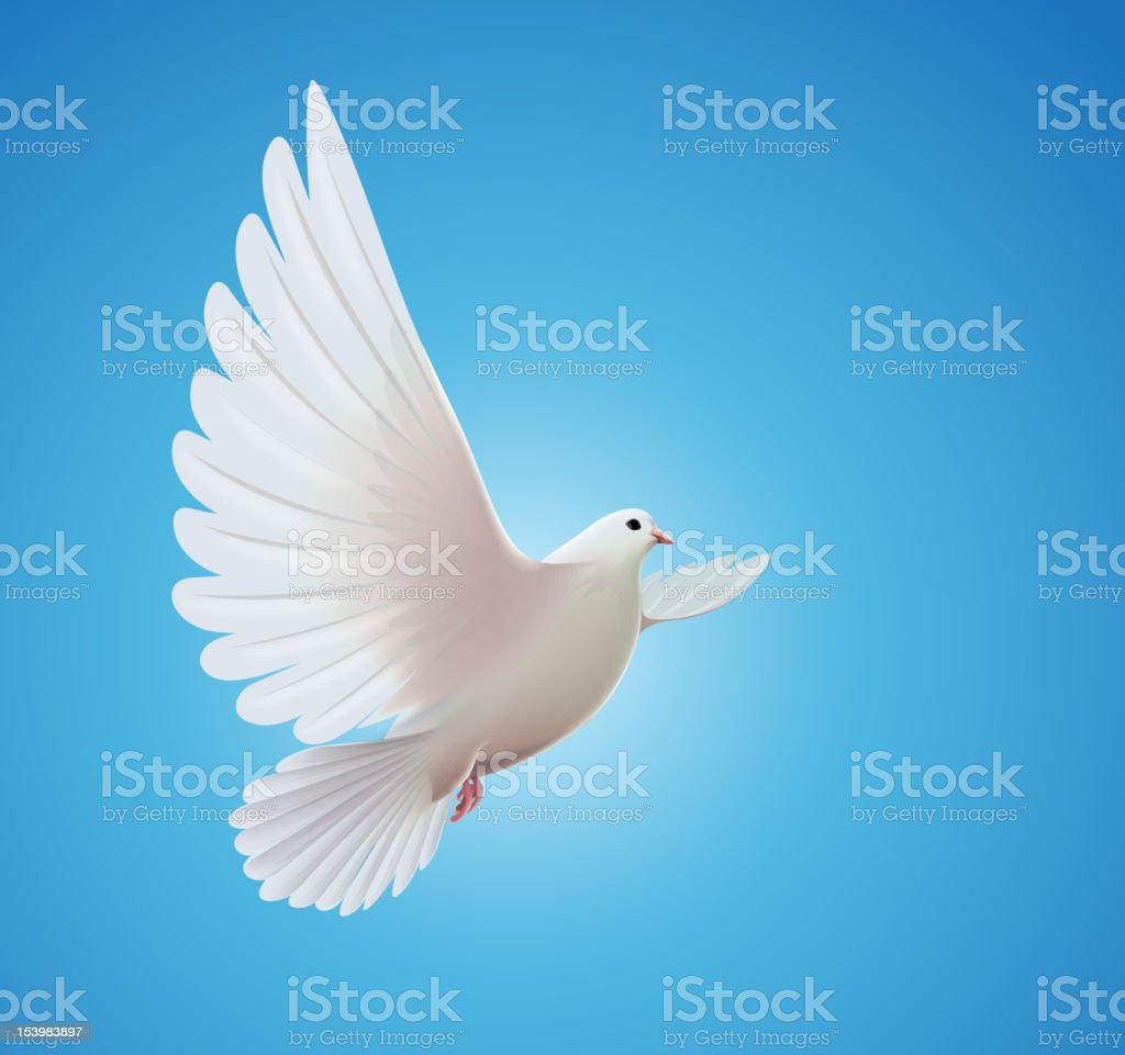 white dove vector art illustration
