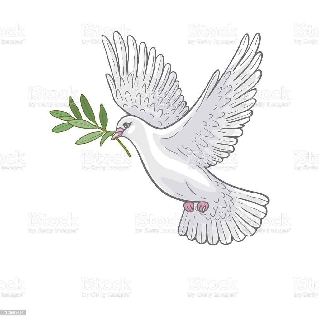 White Dove with olive branch vector art illustration