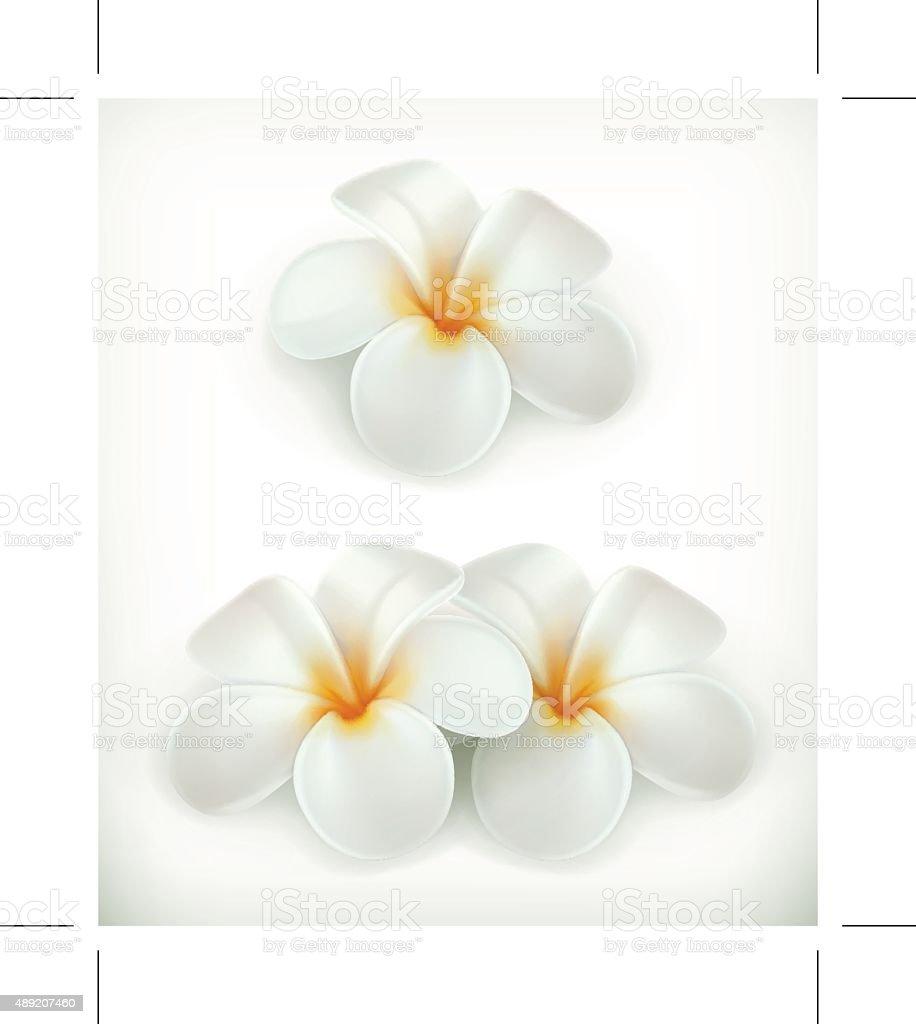 White flowers icons vector art illustration