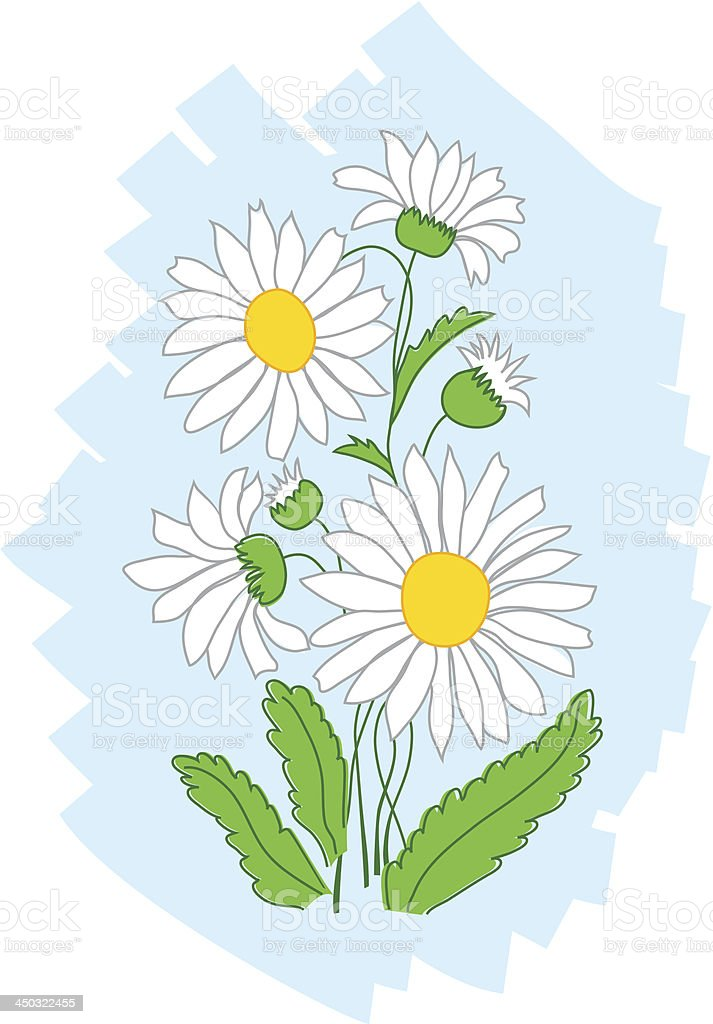white flowers on blue background royalty-free stock vector art