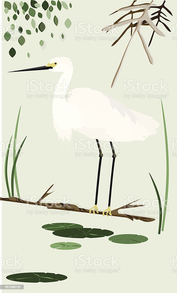 White heron royalty-free stock vector art