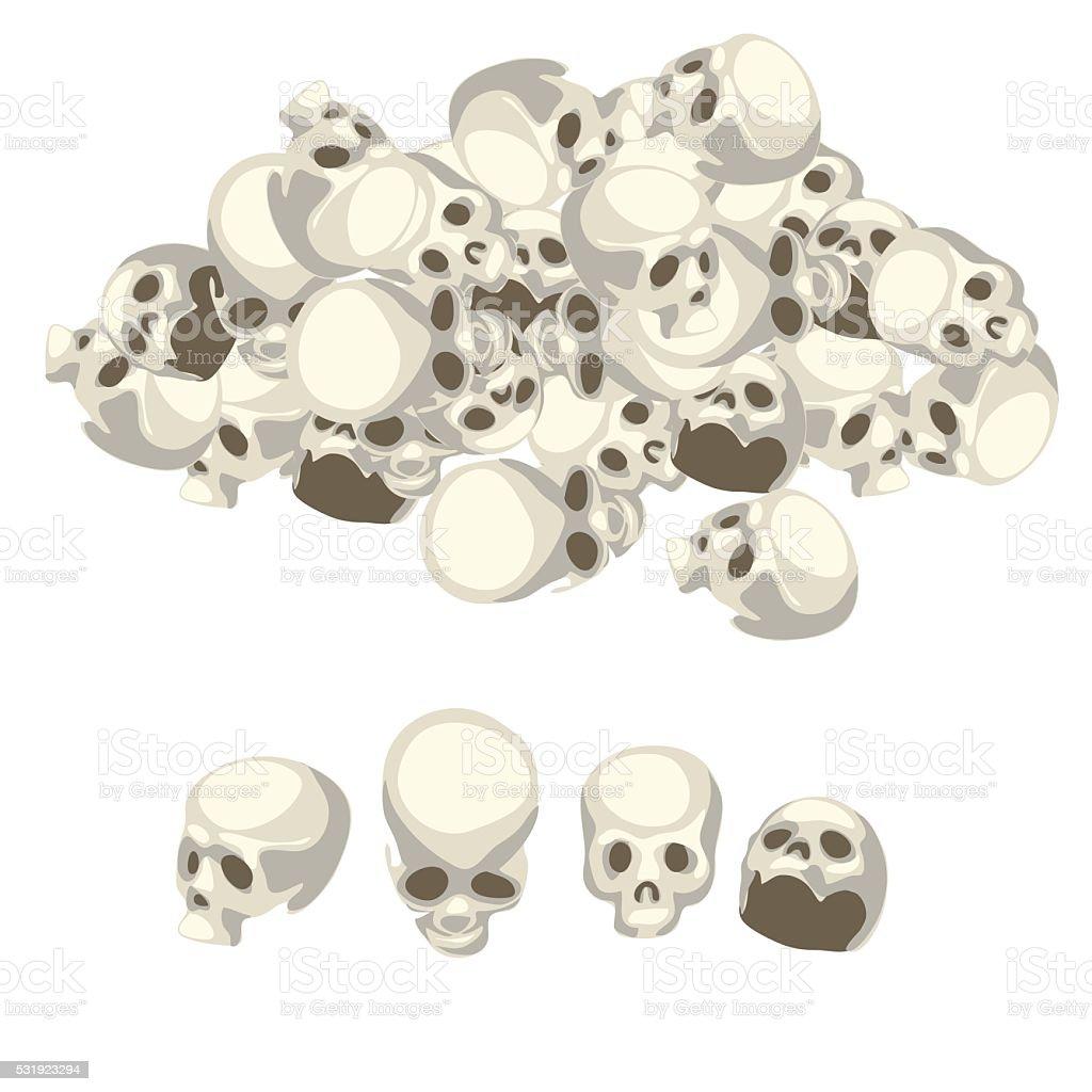 White human skull from different angles vector art illustration