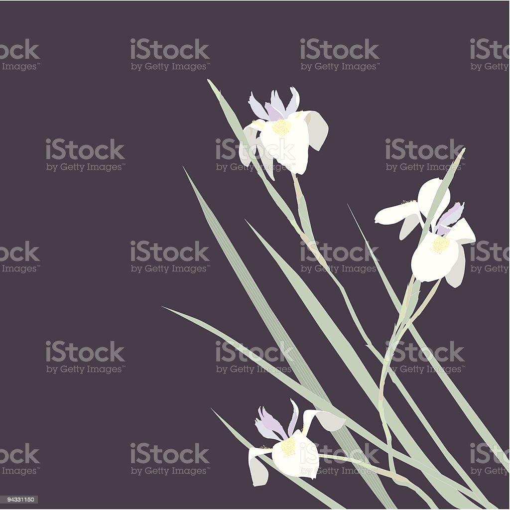 White Iris on Floral Purple background royalty-free stock vector art