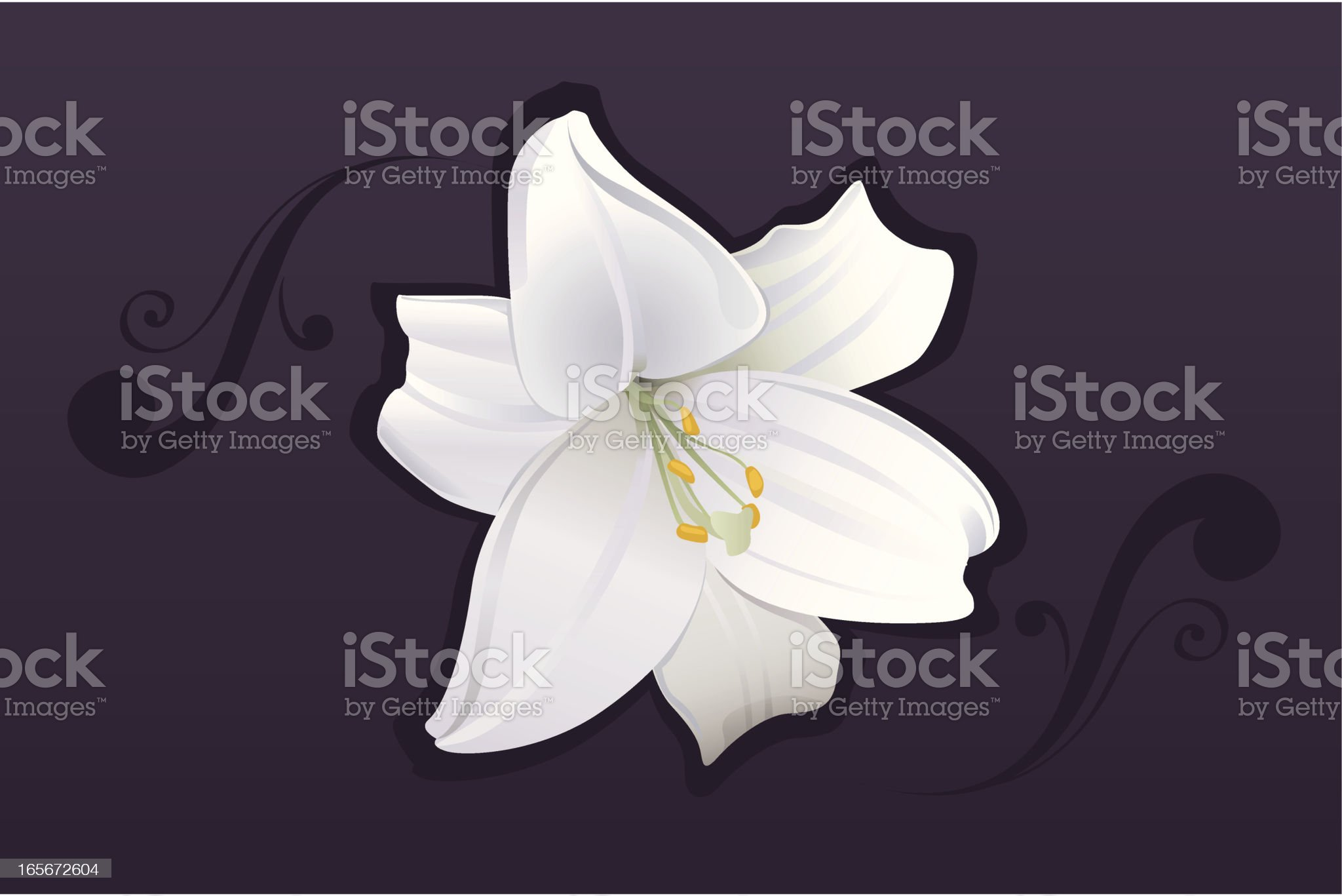 White lily blossom royalty-free stock vector art