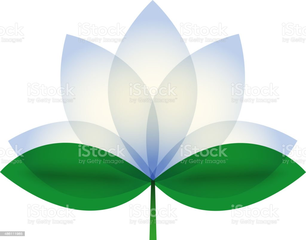 White Lotus blossom. vector art illustration