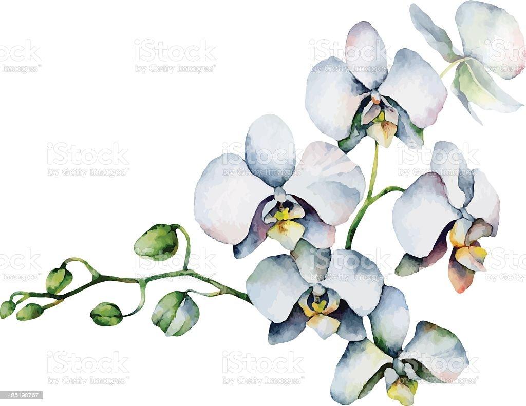 White orchid vector art illustration