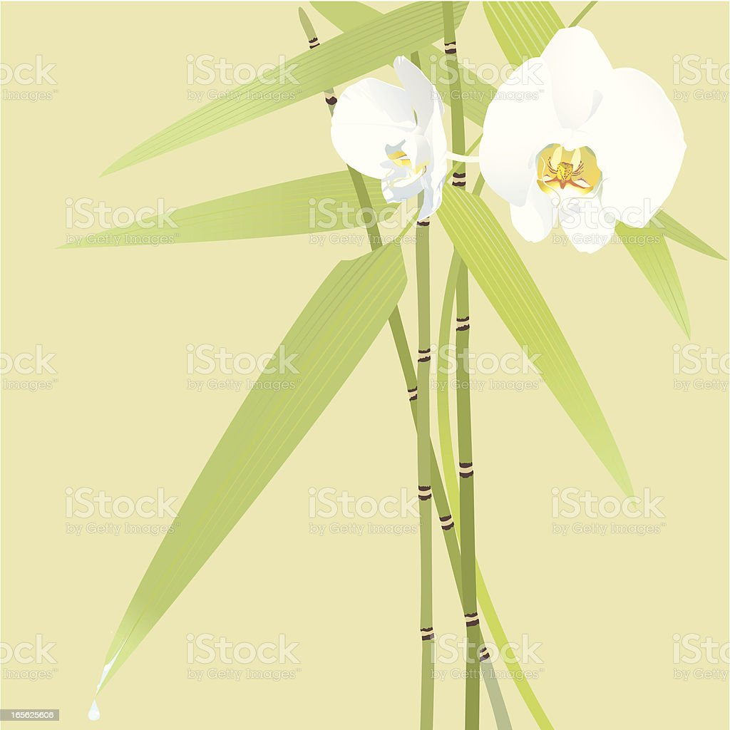 White Orchids Background vector art illustration