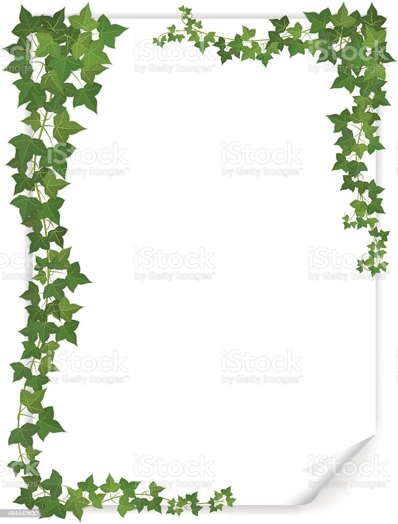 white paper sheet decorated ivy vector art illustration