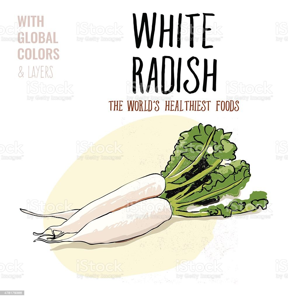 White Radish vector art illustration