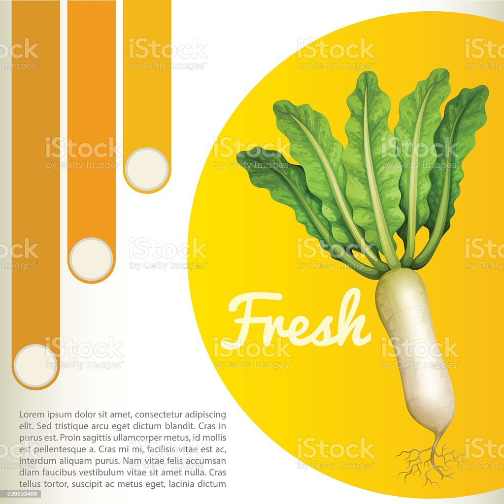 White radish with text vector art illustration