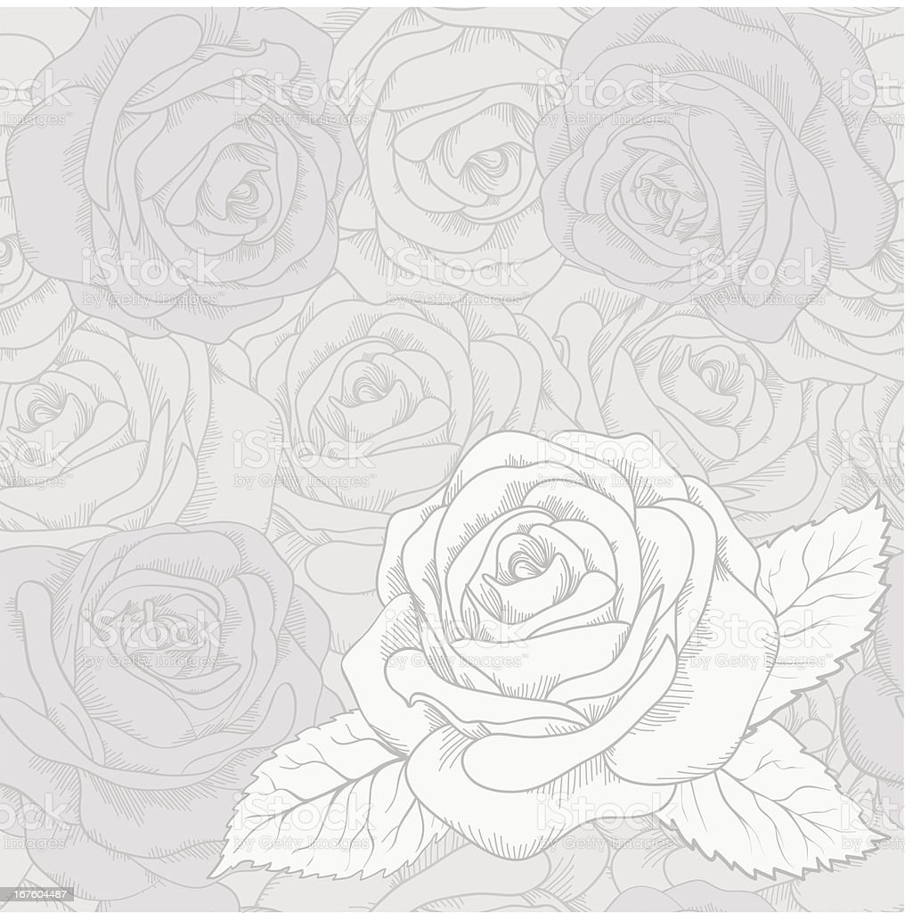 White rose on a gray seamless background. royalty-free stock vector art