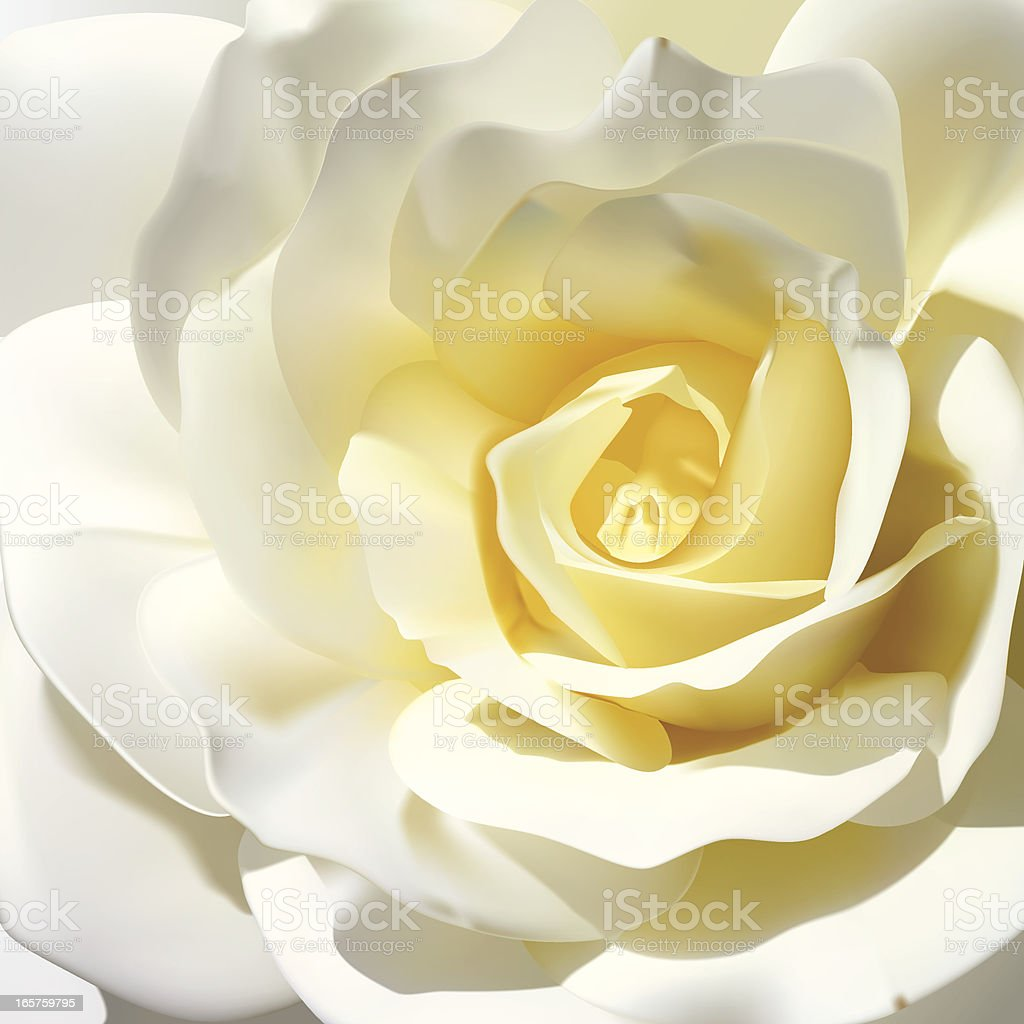 White Rose - Vector Illustration royalty-free stock vector art