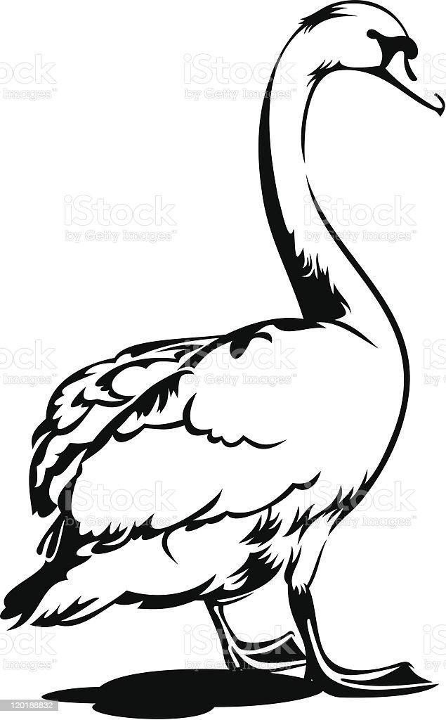 White swan vector art illustration