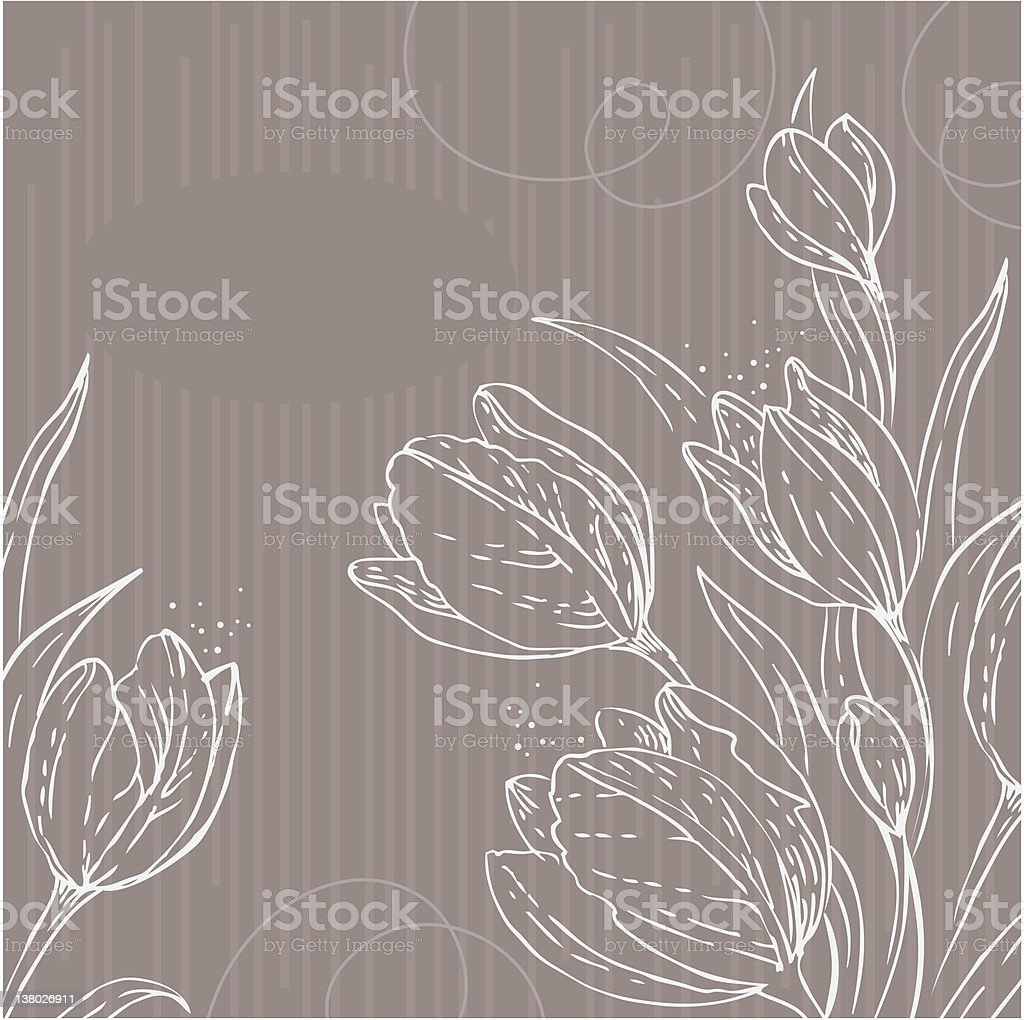 White tulips drawings over colored lined background royalty-free stock vector art