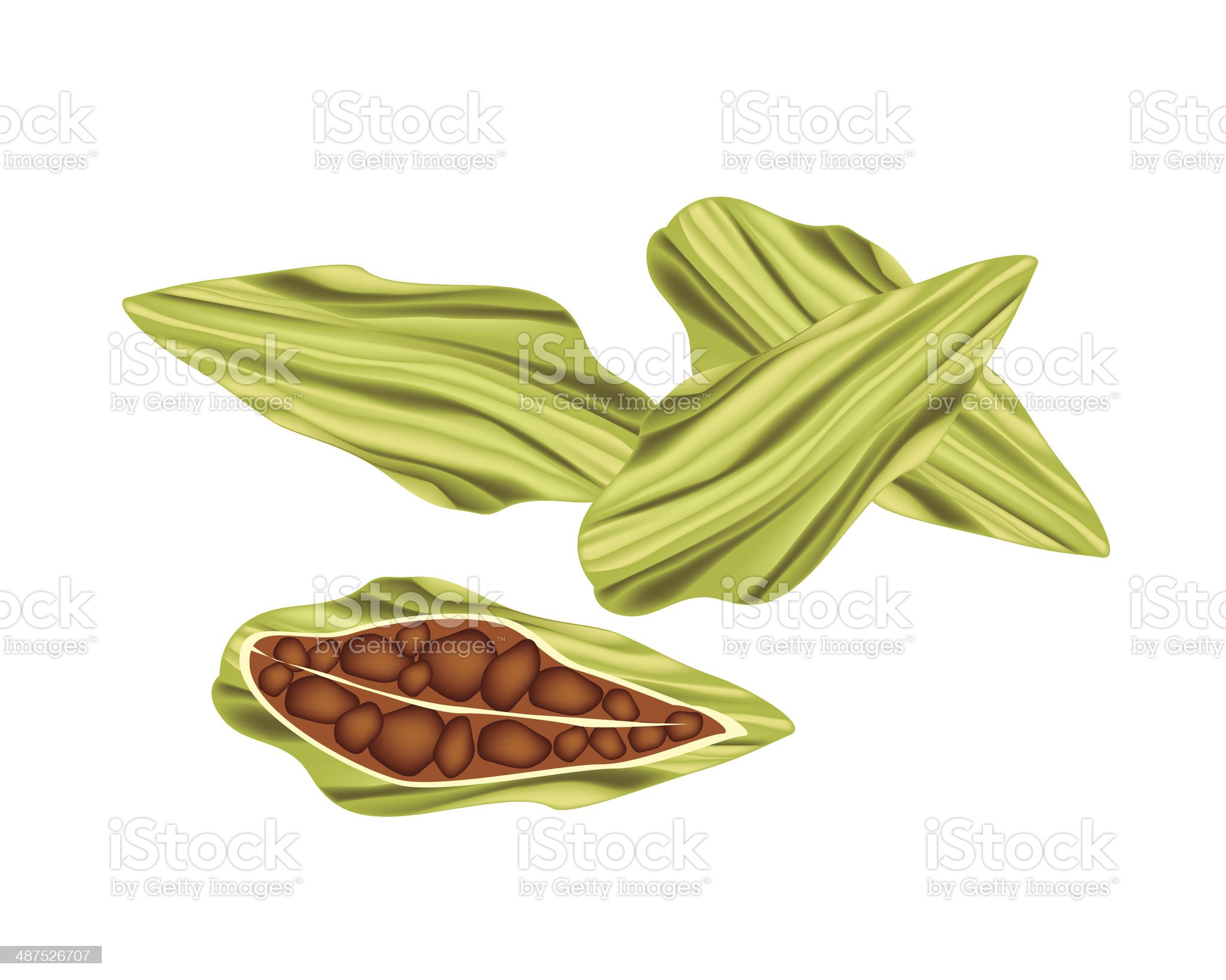 Whole and Half of Fresh Cardamom Pods royalty-free stock vector art