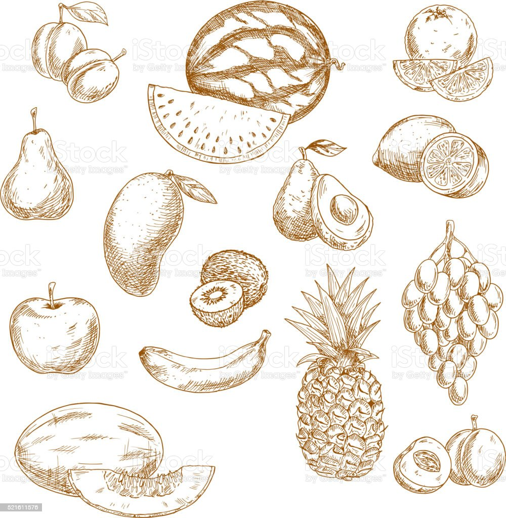 Whole and halved fresh fruits vintage sketch icons vector art illustration