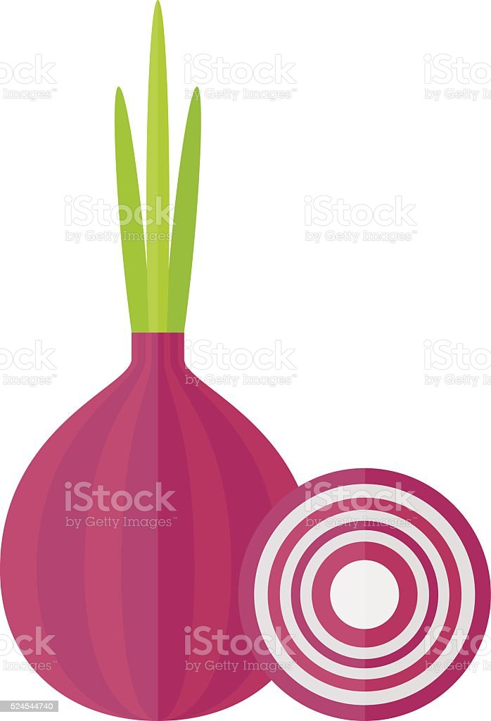 Whole bulb red onion with fresh green sprout, half rings vector art illustration