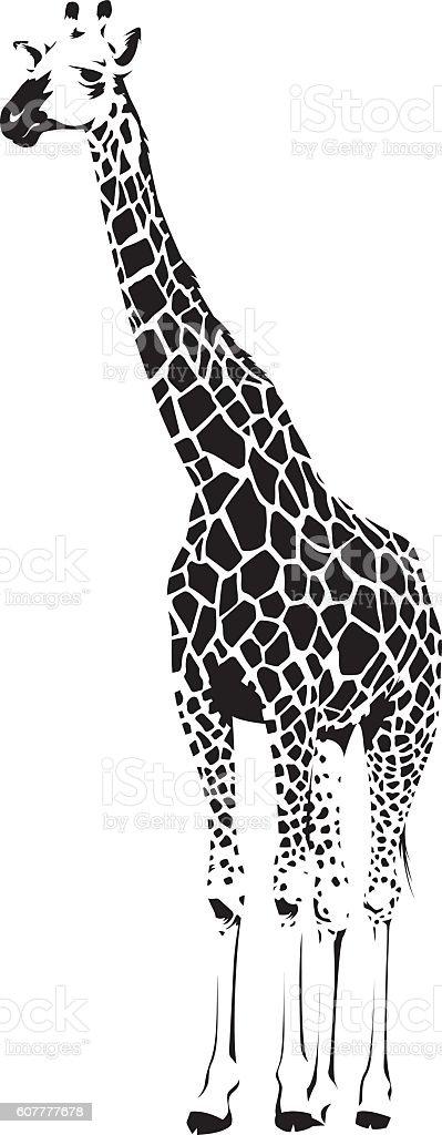 Wild African Giraffe vector art illustration
