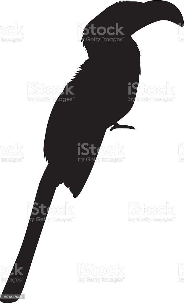 Wild African Hornbill Silhouette vector art illustration
