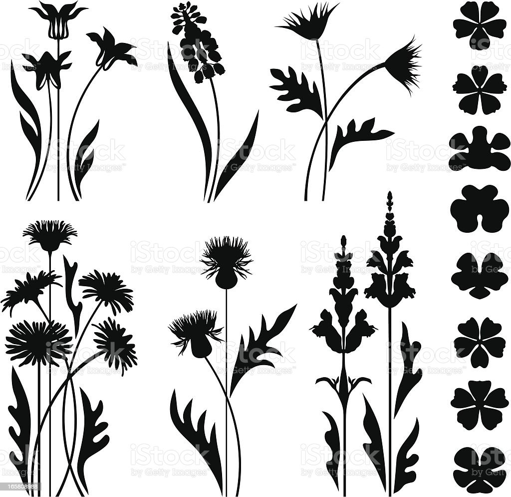 Wild and garden flowers vector art illustration