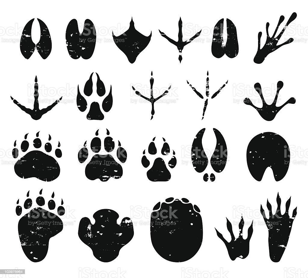 wild animal tracks vector art illustration