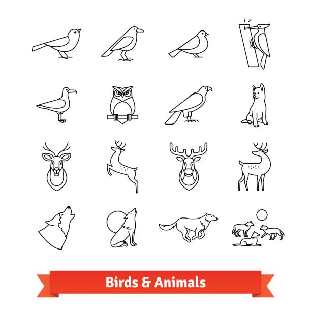 Line Drawing Of Animals And Birds : Turtle dove clip art vector images illustrations istock