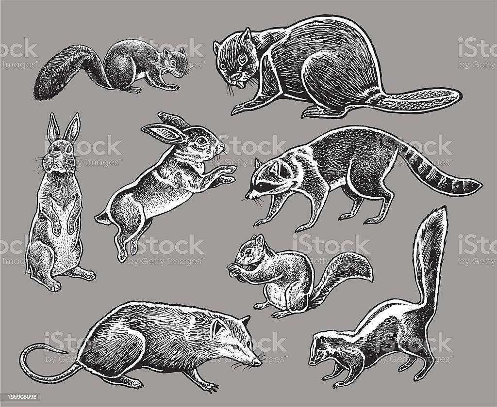 Wild Animals - Squirrel, Rabbit, Skunk, Raccoon royalty-free stock vector art