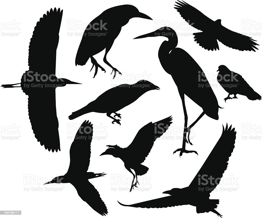 Wild birds silhouettes royalty-free stock vector art