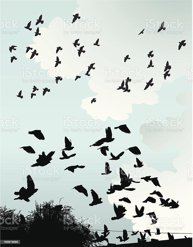 Wild Birds vector art illustration