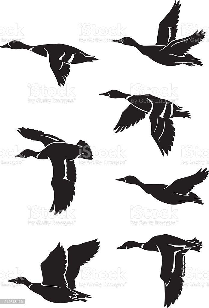Wild Ducks Flying vector art illustration