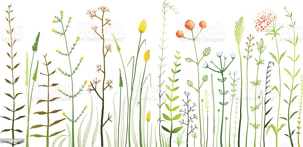Wild Field Flowers and Grass on White Collection vector art illustration