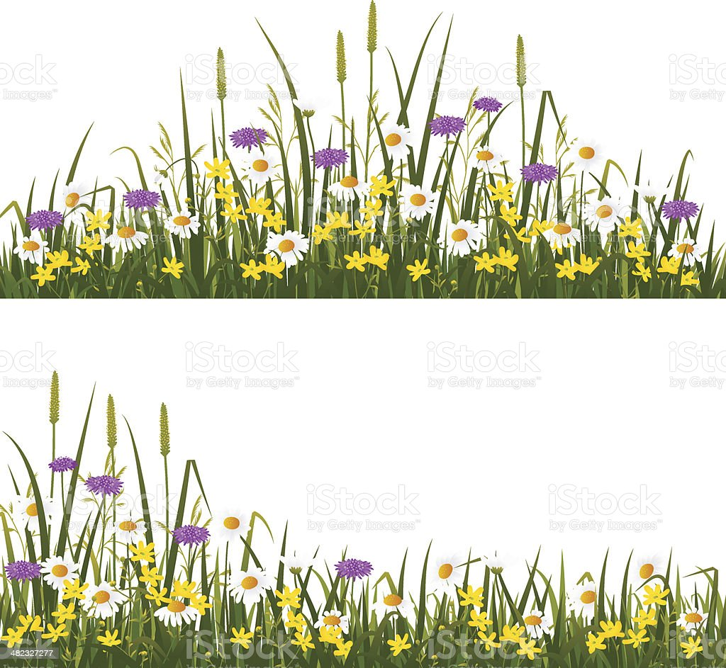 Wild flower meadow vector art illustration