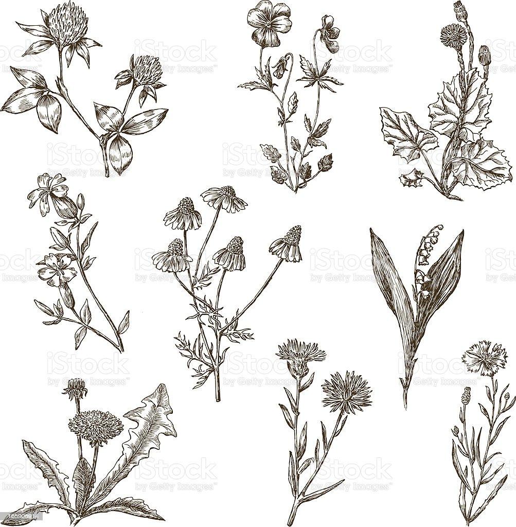 wild flowers vector art illustration