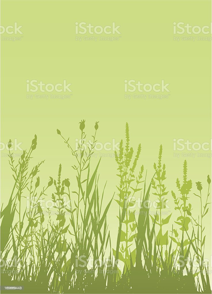 Wild meadow vector art illustration