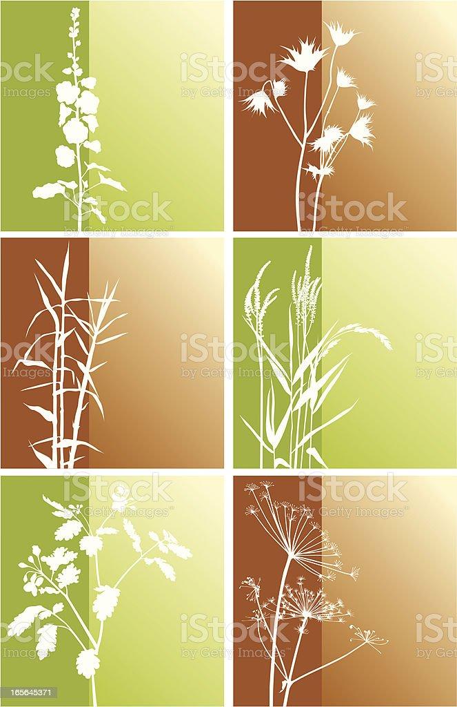 Wild plants backgrounds vector art illustration