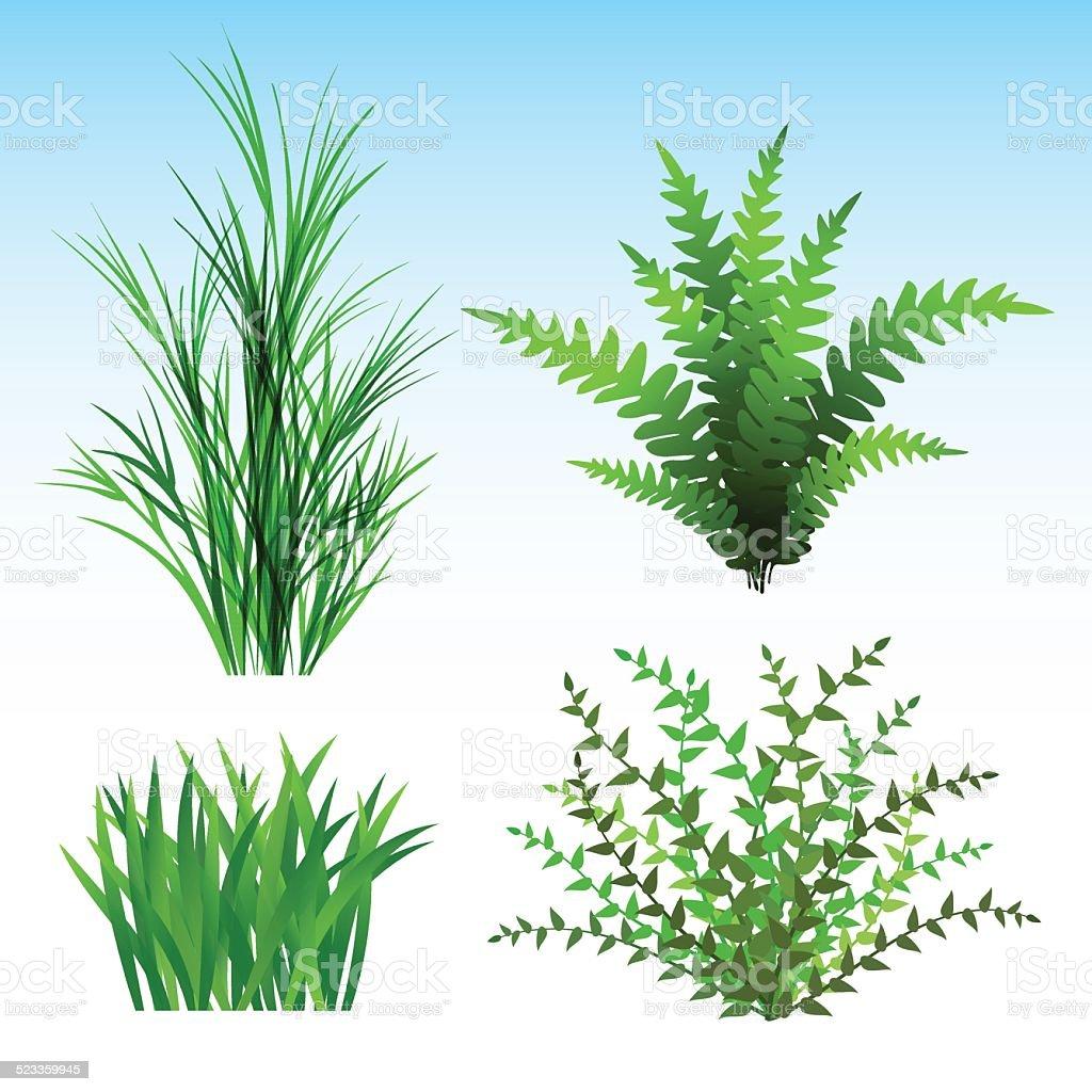 Wild Plants vector art illustration