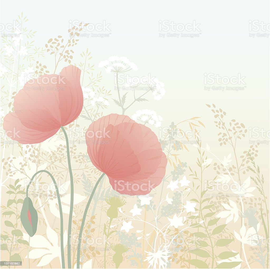 Wild poppies royalty-free stock vector art