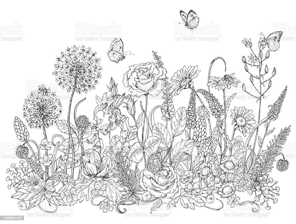 Wildflowers  and insects sketch vector art illustration