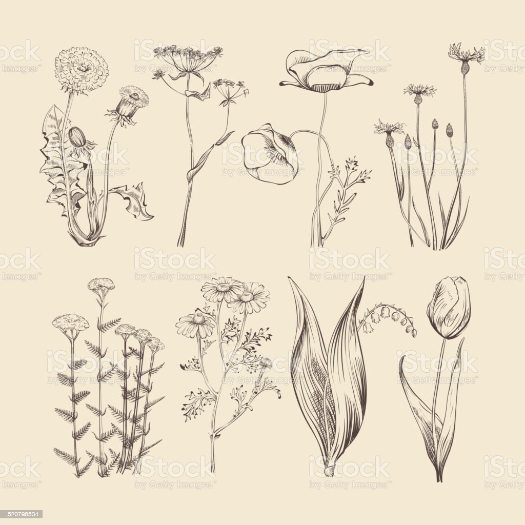 Wildflowers, herbs and flowers. Spring or summer botanical vector collection vector art illustration