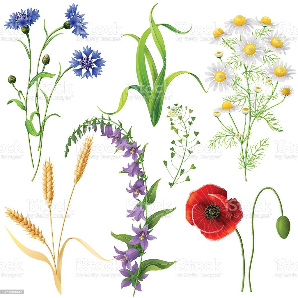 Wildflowers  Set vector art illustration