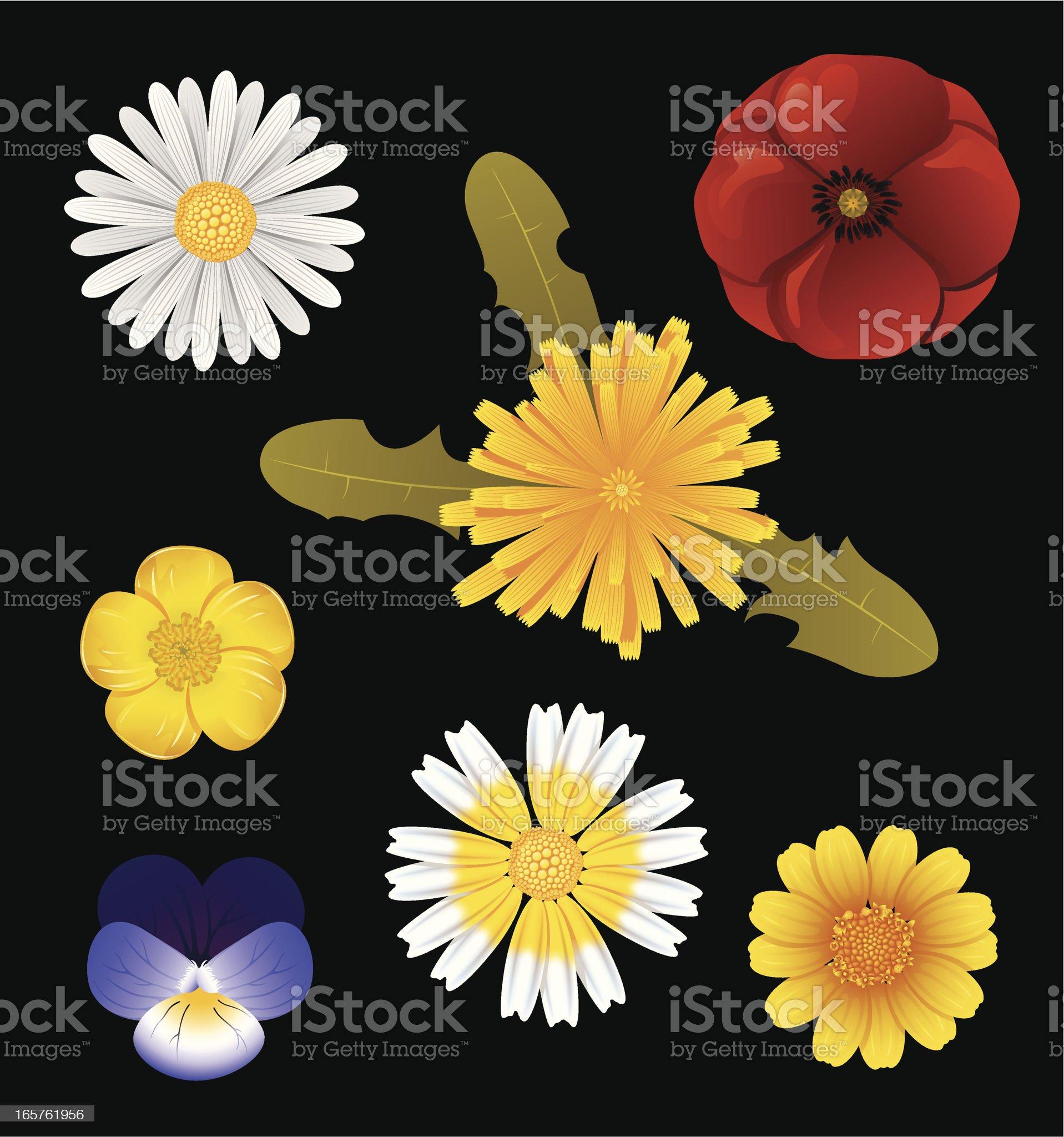 Wildflowers royalty-free stock vector art